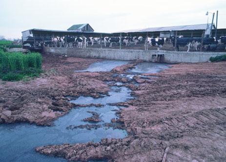 Factory farm run-off