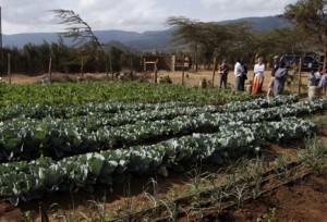 HI-drip irrigation Kenya