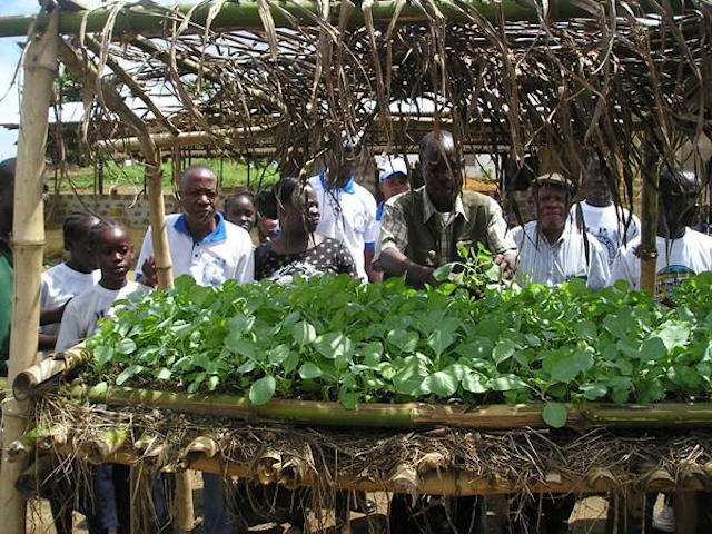 Seeds-for-liberia