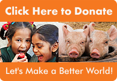 AWFW Donate Banner