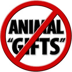 no-animal-gifts-250-sq-b-s-